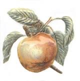 TFA009 Декор Оранжерея Яблоко 9,9х9,9х7