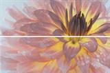 STG/A444/2x/12093R Панно Искья Цветы обрезной 50х75х9